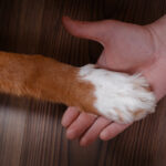 The Sniff Test – Benefits and limitations of diabetes alert dogs